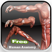 Human anatomy Basic