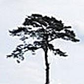 Tree Spotter