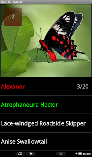 Name That Butterfly - screenshot thumbnail