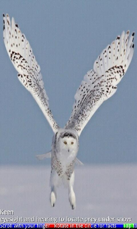 Wild Animals of the Arctic 2- screenshot