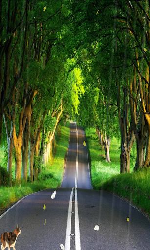 Long Road Live Wallpaper