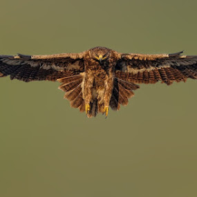 Wings by Raj Dhage - Animals Birds