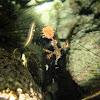 harlequin ghost pipe fish