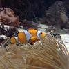 Clown Fish, Eel, and Jellyfish