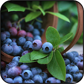 Blueberries Wallpapers