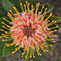 Tree Pincushion
