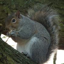 Invasive Species of the UK