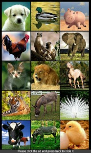 Animal Sounds & Ringtones - screenshot thumbnail