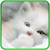 Cute kitten cat FREE WALLPAPER