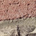 Brown Bark Carpet