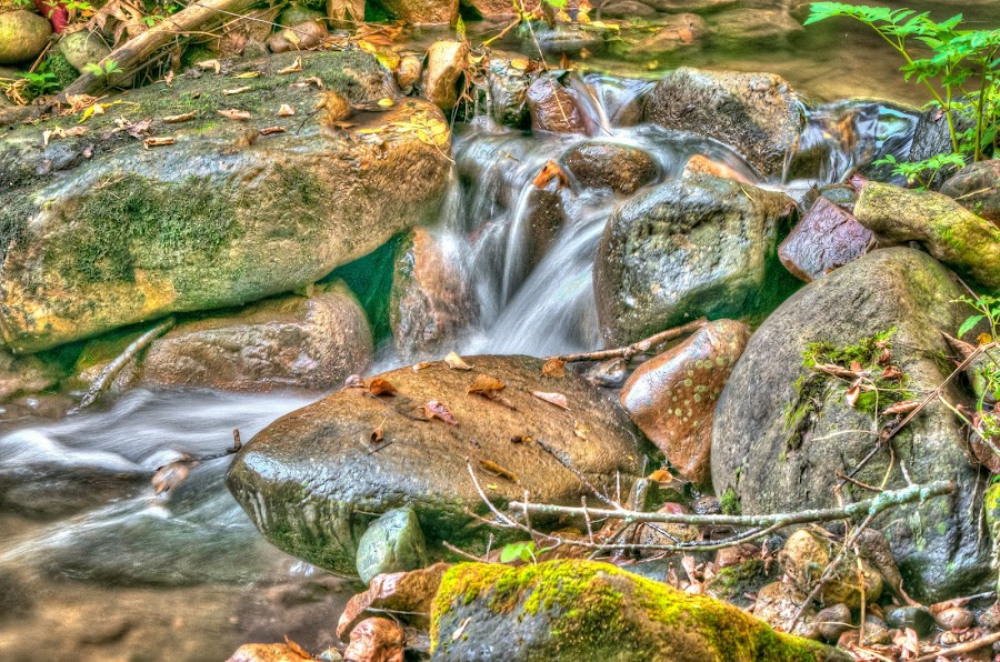 Glen Trickle by Jebark Fineartphotography - Landscapes Waterscapes ( water, glen, wisconsin, parfrey's glen, nature, color, autumn, waterscape, waterfall, flow )