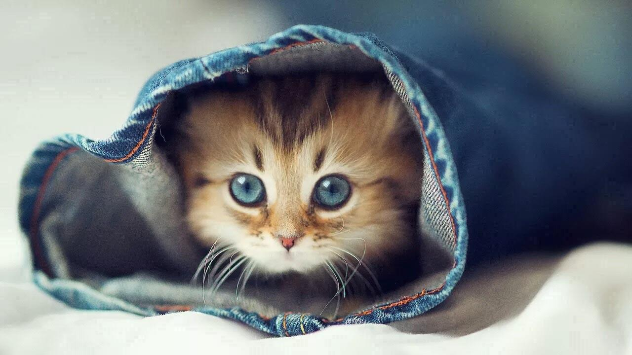 Cute Cat Wallpapers Android Apps on Google Play