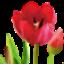 Flower Pot image