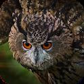 Owl Flight Simulator icon