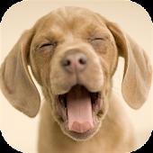 Dog Sounds Set as Ringtone
