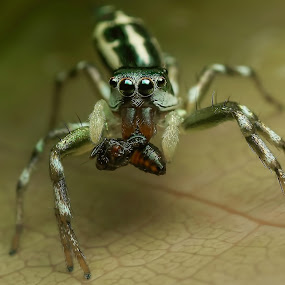 by Cikgu Al - Animals Insects & Spiders