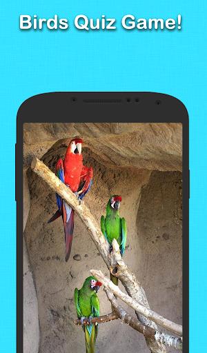 玩益智App|鳥問答游戲免費|APP試玩