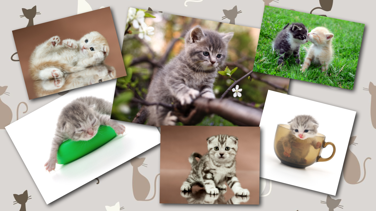 BABY CAT KITTEN LIVE WALLPAPER - screenshot