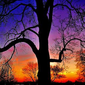 Sunset on the Hill by Scot Gallion - Landscapes Sunsets & Sunrises ( silhouette, , blue, orange. color )