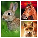 Animals LIve Wallpaper icon