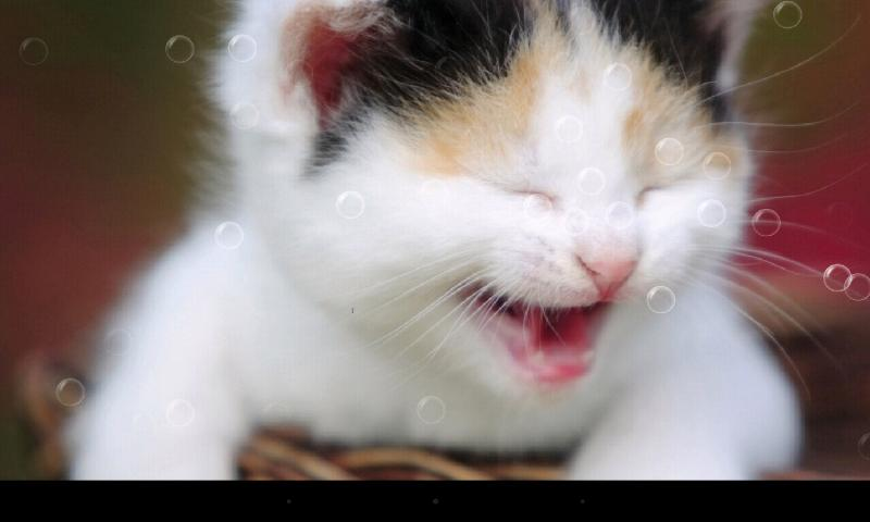 funny cat live wallpaper android apps on google play