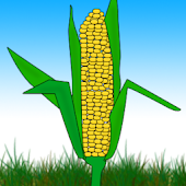 How Indian Corn Came  World