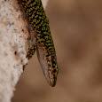 Wildlife of Corsica and Sardinia
