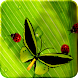 Friendly Bugs Live Wallpaper icon