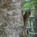 Spotting
