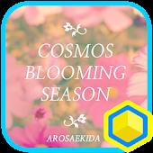 코스모스 피는 계절 : 카카오홈 테마