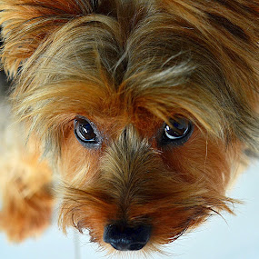 by Tupu Kuismin - Animals - Dogs Portraits