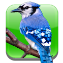 BirdWatch Calendar icon
