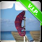 Beach chameleon live wallpaper icon
