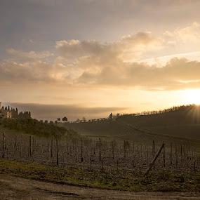 Sunrise in Chianti by Ricky Papex - Landscapes Sunsets & Sunrises ( wine, chianti, vineyard, tuscany, sunrise, italy, fields, , path, nature, landscape )