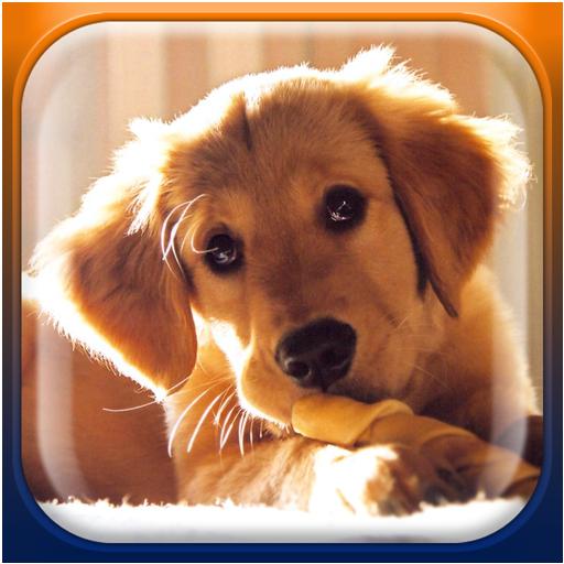 可愛的小狗動態壁紙 個人化 App LOGO-硬是要APP
