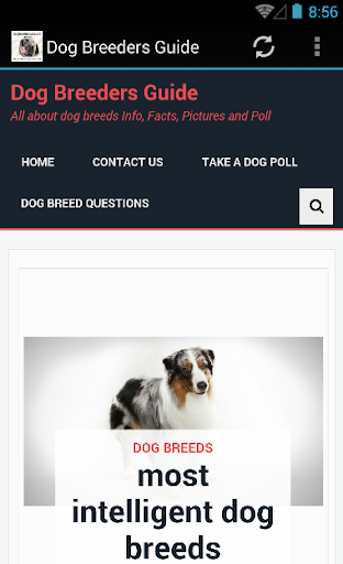 Dog Breeders Guide