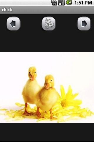 chick Wallpaper - screenshot