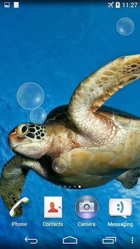 바다 거북 수중 라이브 배경