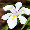 Large wild iris