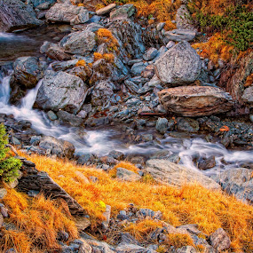 mountain river by Nicu Hoandra - Landscapes Waterscapes ( mountains, autumn, trees, river )