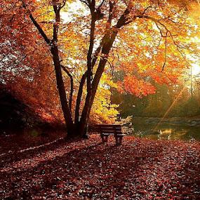 by Chance Rollison - Landscapes Sunsets & Sunrises