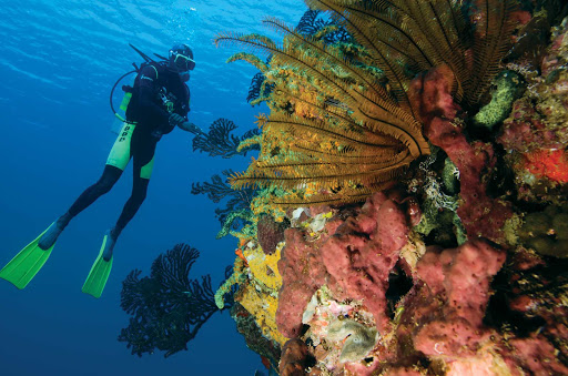 St-Lucia-scuba-diving - A coral reef off the Caribbean island nation of St. Lucia.