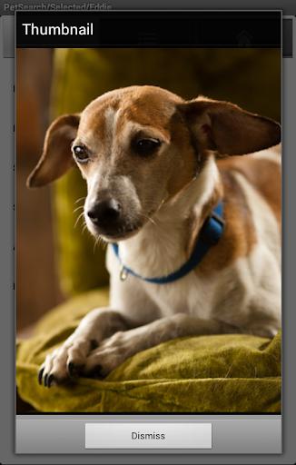 Pet Adoption Search