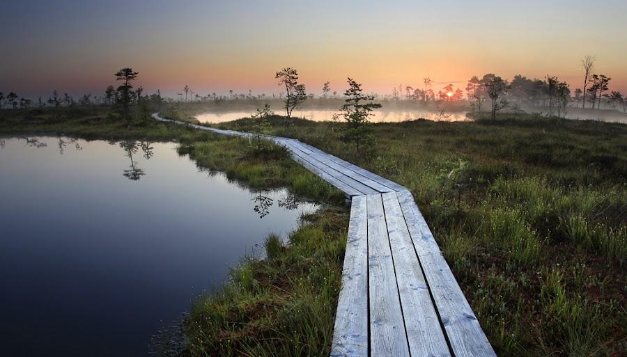 Blue Eyes by Rok Godec - Landscapes Travel ( water, estonia, europe, waterscape, horizon, lake, bog, landscape, sun, baltic, tree, path, summer, sunrise, bogs )