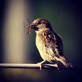 Bird white food by Trond Svendsen - Animals Birds