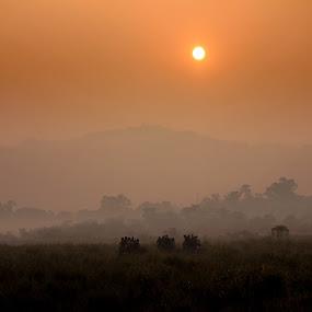 Intruders by Mitrava Banerjee - Landscapes Sunsets & Sunrises
