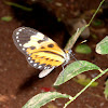 Mariposa. Butterfly. Borboleta