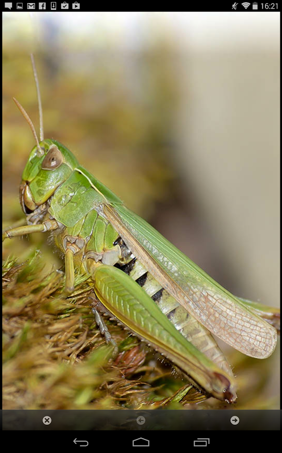 iRecord Grasshoppers- screenshot