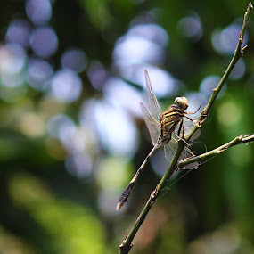 by Rajkumar Biswas - Animals Insects & Spiders