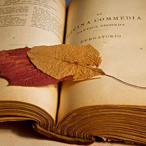 Dried Leaves on Book by Miren Etcheverry - Artistic Objects Still Life ( open book, page, still-life, pages, book, binding, leaf, leaves, dried leaf,  )